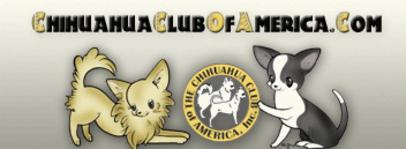 AKC CHIHUAHUA BREEDER in Missouri , CHAMPION CHIHUAHUA AND